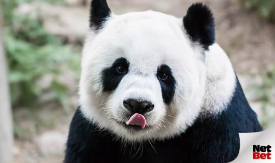Feiere den Tag des Pandas mit den besten Themenslots, die NetBet zu bieten hat!